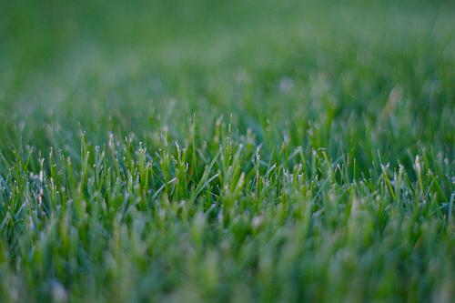 Grass_Spiritual_Growth