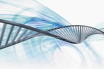junk_DNA